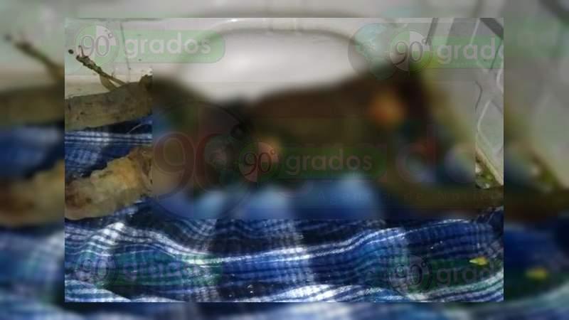 Matan a un apatzinguense y su sobrino de 14 años en Coalcomán, Michoacán