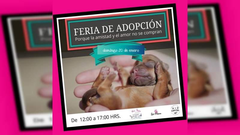 El próximo domingo, Feria de Adopción Canina y Felina en el Restaurante Pet Friendley Río Capital