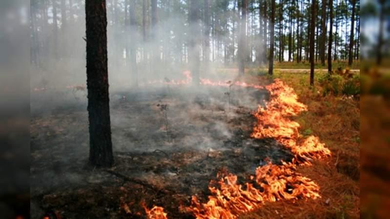 Científicos mexicanos aplican sus conocimientos contra los incendios forestales