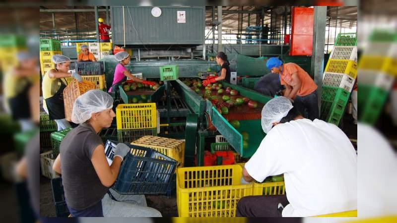 Arranca la temporada de exportación de mango 2019 en Apatzingán : Chávez Contreras