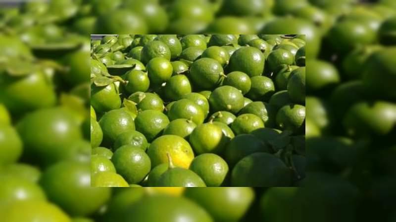 Por encima de los 10 pesos, el precio del kilogramo de Limón mexicano