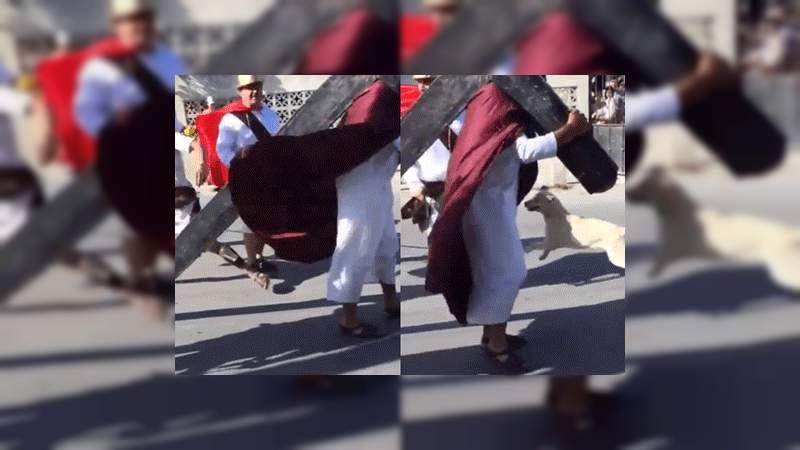 Un perrito defiende a Jesús durante el Viacrucis