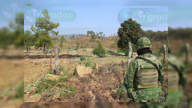 Desmantelan 16 hectáreas de aguacate ilegal en Zacapu