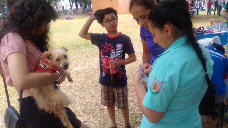 Aplica Ijumich vacunas antirrábicas gratuitas a mascotas, en Festival de Adopción