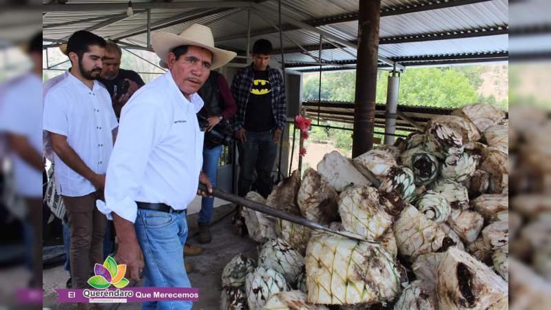 Queréndaro deleita a cientos con Ruta del Mezcal Michoacano