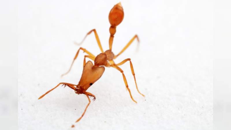Investigador de la UNAM lidera el primer sondeo de insectos en una isla del Pacífico Sur .
