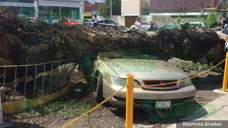 Árbol cae sobre un vehículo en la avenida Ventura Puente de Morelia
