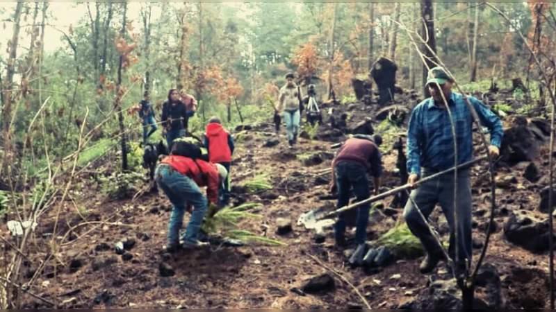 Reforestan más de 15 mil árboles en el Cerro del Tecolote