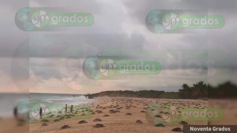 Miles de tortugas llegan para desovar a Ixtapilla