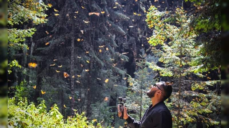 La mariposa monarca ya llegó a los santuarios de Michoacán