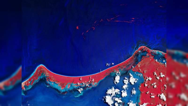 Captan desde el espacio el sargazo en el Caribe mexicano