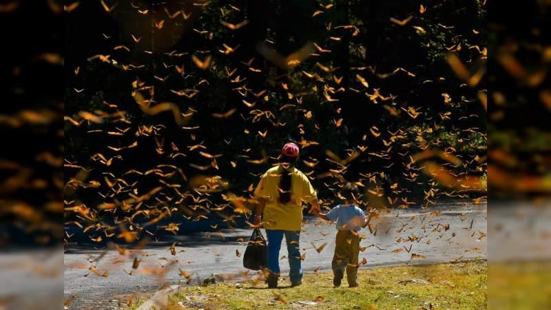 Con el Código de Turismo Responsable buscan preservar a la Mariposa Monarca