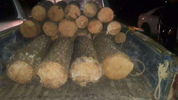 Aseguran camión y camioneta con madera en Charo y Tingambato, Michoacán; hay dos detenidos