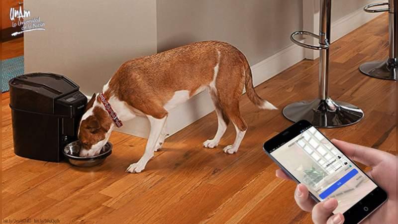 Desarrollan en la UNAM dosificador de alimento para perros, que se activa con el celular