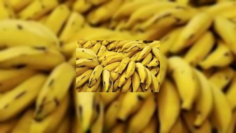 Repunta precio del kilo de plátano que se produce en la Región Apatzingán