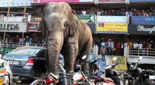 Elefante causa destrozos en poblado de la India