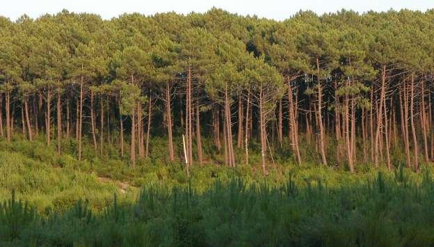 No todos los bosques son iguales cuando se trata del cambio climático