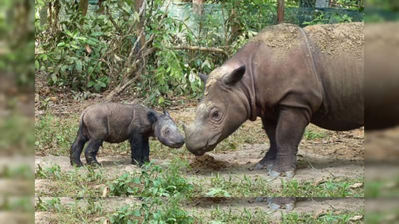 En 2019, dos especies animales fueron declaradas extintas